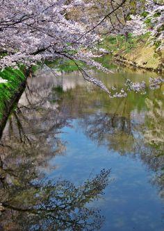 380:「春の堀辺では水面に桜が映り込み、 空の青色・木々の緑色・桜の桃色の3色に染まる美しい光景に 魅了されました。」@上田城跡公園