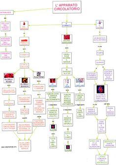 Mappa scienze: Apparato circolatorio