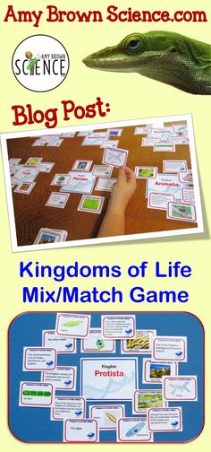 Reinforcement your lessons on classification, taxonomy and the 6-Kingdom classification system using this fun card sort game.