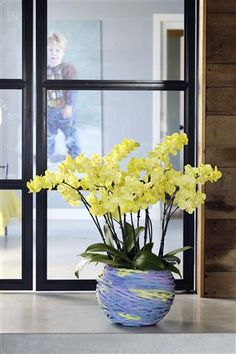 Get the spring into your home with this eye-catcher ©Anthura #phalaenopsis #Cagliari #yellow