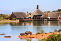 You will be accommodated at Buffelsdrift Game Lodge in very comfortable ranger quarters closr to the main reception, restaurant and elephant enclosure.
