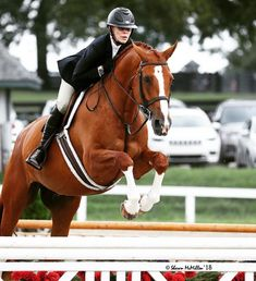 Kicked in the Head: The Equestrian Helmet Andalusian Horse, Friesian Horse, Arabian Horses, Palomino, English Riding, Black Horses, Hunter Jumper, Show Jumping, Horse Pictures