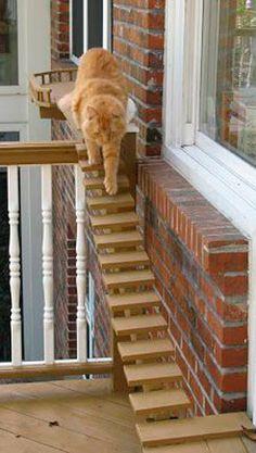 Кот и среда обитания. - Home and Garden