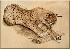 This is a 24''x 16'' wood panel with Pyrography (wood burning) of a Bobcat and butterfly