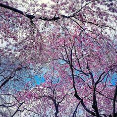 【3jsb_ors034】さんのInstagramをピンしています。 《🌸 2月9日(木曜日) 🌸 🌸 おはようございます😉 🌸 イマソラは雨なので 去年の桜をpostします🌸 🌸 今年ももうすぐ会える💓 最近TVから流れる某CMを見ているとめちゃくちゃ癒されると同時に早く会いたくなる😍 🌸 今日も笑顔が溢れる1日になりますように😄 皆さん🎵素敵な1日をお過ごし下さいね✨ 🌸 🌸 #桜#さくら #三嶋大社 #去年の桜 #SAKURA #Cherry_Blossoms #あなたに見せたい風景 #あなたとみたい風景 #wp_まっぷ花まつり #はなまっぷ》