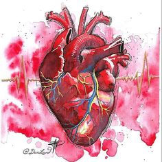 'heart art' by maramk Human Anatomy Art, Heart Anatomy Drawing, Human Heart Drawing, Dna Drawing, Art Watercolor, Skeleton Art, Medical Art, Heart Painting, Anatomical Heart