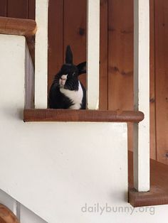 Bunny, you're so little - how did you get up those big stairs? - June 17, 2015
