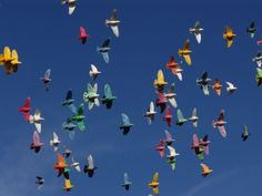 Homing Pigeons - Feathers of the Rainbow   Catherine Cluett