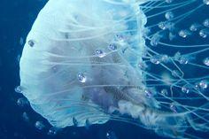 How do you make a jellyfish wear an activity tracker?