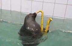 focas fofas - Pesquisa Google