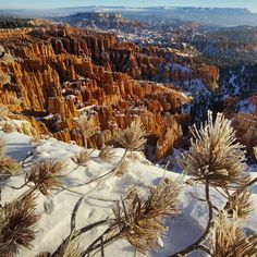 Photo by @TimLaman.  Frost covered pine needles on my second morning at Bryce Canyon.  Another spectacular sunrise at sub-zero temperatures but well worth it.  Shot from higher on the ridge to get this expansive view of the area. Heres to the centennial of our US National Parks this year!  So appreciative of our forefathers who set aside these lands.  #BryceCanyon #NationalPark #Utah @natgeocreative @thephotosociety.  See more from my trip @TimLaman. by natgeo