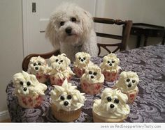 Google Image Result for http://i.redsnapperverytasty.com/graphics/wp-content/uploads/2012/08/poodle-cupcakes-500x397.png