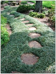 Dwarf Mondo Grass walkway...repurpose those concrete stones and interplanetary with mondo grass...plant thickly to fill in between stones...survives drought...never needs mowing...grows where traditional grass fails