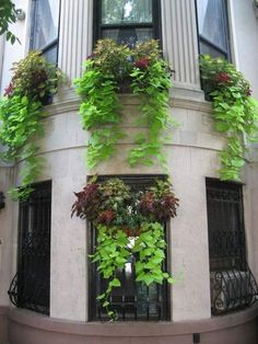 Beautiful window boxes photo - Bing Images