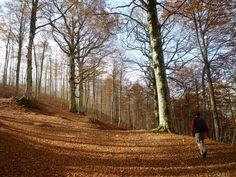 https://flic.kr/p/8RyrYz | Nel bosco d'autunno | Andate nei boschi in autunno  i tre frati a Guardiaregia