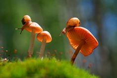 Vadim Trunov, a self-taught nature photographer based in Voronezh, Russia, takes beautiful macro photos of snails, insects and mushrooms that seem to personify them and weave beautiful little stories around these oft-overlooked creatures' lives. Beautiful Bugs, Beautiful World, World Photography, Animal Photography, Amazing Photography, Photographie Macro Nature, Reptiles, Fotografia Macro, Butterfly Photos
