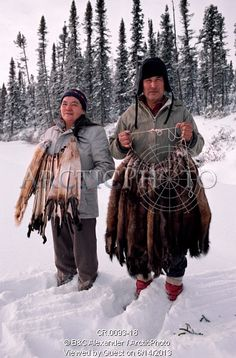 Image of cree trapper and wife, abel & elizabeth brien, with pelts of autumn catch of pine martens, quebec, canada by ArcticPhoto