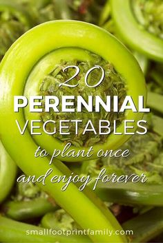 20 Perennial Vegetables to Plant Once for Years of Bounty! With the exception of asparagus, rhubarb and artichokes, most gardeners are unaware of the tasty, nutritious bounty that perennial vegetables can offer. Try these 20 perennial veggies for a bounty Perennial Vegetables, Growing Vegetables, Fruits And Vegetables, Veggies, Perennial Plant, Perennial Gardens, Growing Tomatoes, Most Nutritious Vegetables, Growing Herbs
