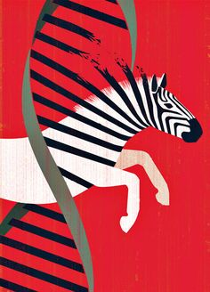 The Zebra Hunter. Ada Hamosh is on a quest to find—and treat—some of the rarest genetic diseases known to man. Writer Eva Hagberg Fisher, who recently learned that she has a rare disease of her own, knows firsthand the value of a diagnosis. Zebra Illustration, Science Illustration, Digital Illustration, Art Adn, Dna Kunst, Bio Arte, Dna Drawing, Zebra Drawing, Dna Art