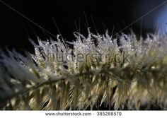close up dew in morning - stock photo