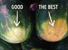 How topick aperfect watermelon: tips from anexperienced farmer                                                                                                                                                                                 More