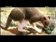 Autópsia animal - Canguru (dublado) #Documentario17 #Documentario #Canguru #Canguru17