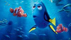 """El éxito de """"Buscando a Dory"""" podría poner en peligro al pez cirujano."""