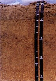 Tifton soils formed in loamy sediments of marine origin.They are among the most important agricultural soils . About 27% of  Georgia's prime farmland is in areas of Tifton soils. Cotton, peanuts, soybeans, corn are the principal crops grown on these soils. The Profile Surface layer: dark grayish brown loamy sand Subsoil - upper: strong brown fine sandy loam  Subsoil - middle: yellowish brown sandy clay loamSubsoil - lower: strong brown sandy clay There is more than 5% plinthite in the…