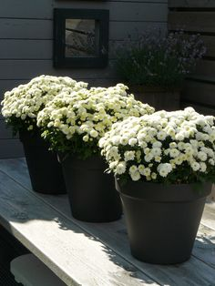 @Vickie Hsieh Istre Riley Area Rentals we are gearing up for #spring #gardening!