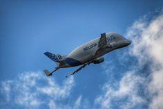 https://flic.kr/p/z16wqY | Beluga | Airbus Beluga hier à l'aéroport de Toulouse Blagnac
