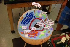 how to make a animal cell model styrofoam Edible Cell Project, Plant Cell Project, Cell Model Project, Animal Cell Project, 3d Animal Cell Model, 3d Cell Model, Plant Cell Model, Biology Projects, Science Fair Projects