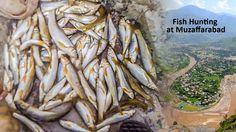 Fish Hunting at Muzaffarabad with New Style