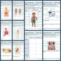fichas conocimiento del medio sexto primaria Teaching Science, Teaching Tips, Spanish Teacher, Home Schooling, Science And Nature, Phonics, Human Body, Anatomy, Homeschool