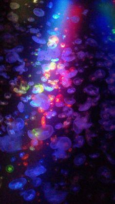 ゆるフワ系が好きな人はチェック!世界一の「クラゲ水族館」 - NAVER まとめ