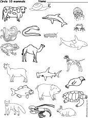 Worksheet for identifying mammals; circle words