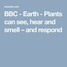 BBC - Earth - Plants can see, hear and smell – and respond