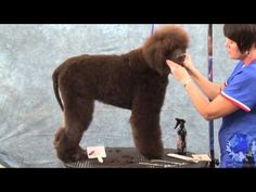 Grooming the Irish Water Spaniel Part 1 - YouTube