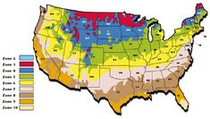you can see from this map, bleeding heart plants are hardy in almost all of the growing zones in the United States. Zone 5 Plants, Plant Zones, Water Garden Plants, Container Water Gardens, Gardening Zone Map, Gardening Direct, Organic Gardening, Paw Paw Tree, Dutch Gardens