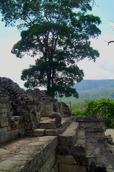 View from Copan Ruins