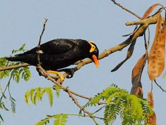Chapramari Wildlife Sanctuary - in West Bengal, India