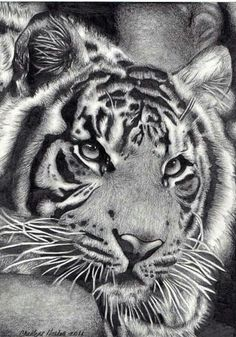 I Love Cats, Big Cats, Big Animals, Black N White, Animal Drawings, Lions, Amazing Art, Wildlife, Creatures