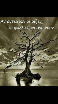 Shades of grey Shades of grey Greek Quotes, Wise Quotes, 365 Quotes, Motivational Quotes, Shades Of Grey, Cool Pictures, Cool Photos, Amazing Photos, Shocking Blue