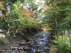 Izu Japan Bamboo Grove Creek Bed Nature Photography by 4StoriesUp