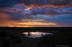Black Rhino at the Watering Hole ; photo by Johan Georget; Namibia Etosha National Park.
