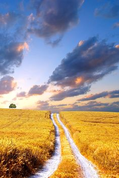 Makes me think of Superman. Nice Epic sense with the field and burning sky.  Amazing photo...yellow field.