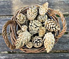 We test out bleaching pine cones at home. Does it really work and how long does it take? We have all the answers here! See them turned into a beautiful centre-piece. Would be perfect to use in winter crafts and for Christmas decorations.