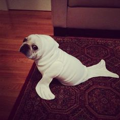 太好笑了~! dog seal costume.