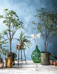 Maak je eigen binnentuin aan de hand van een blauwe muur en groene planten | Cre...  #binnentuin #blauwe #eigen #groene #planten