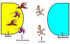 Active nervous system games.  Synaptic tag, neuron chain, all or none, neuron jump rope, cochlear hopscotch, etc.