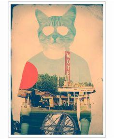 Cool Cat of Ali Gulec now on JUNIQE!